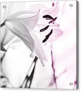 Pink Lily Feature Acrylic Print