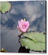 Pink Lily Monet Acrylic Print