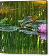 Pink Lotus Flower Acrylic Print