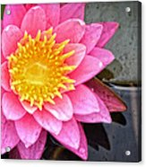 Pink Lotus Flower - Zen Art By Sharon Cummings Acrylic Print