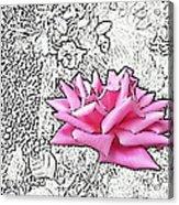 Pink Acrylic Print