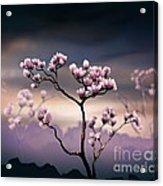 Pink Magnolia - Dark Version Acrylic Print