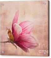 Pink Magnolia I Acrylic Print