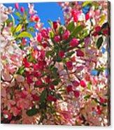 Pink Magnolia Acrylic Print by Joann Vitali