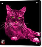Pink Maine Coon Cat - 3926 - Bb Acrylic Print