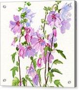 Pink Mallow Flowers Acrylic Print