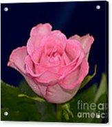 Pink Mist 8498 Acrylic Print