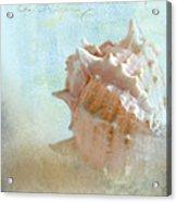 Pink Murex Seashell Acrylic Print