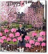 Pink New Year Greeting Acrylic Print