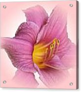 Pink On Pink Acrylic Print