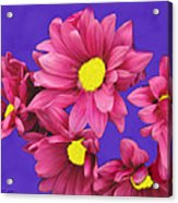 Pink On Purple Acrylic Print
