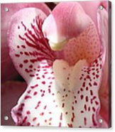 Pink Orchid Closeup Acrylic Print