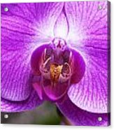 Pink Orchid Detail Acrylic Print
