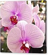 Pink Orchid Duo Acrylic Print