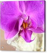 Pink Orchid On White Colored Driftwood Acrylic Print by Sabine Jacobs
