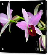 Pink Orchids Cascading Acrylic Print