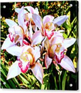 Pink Spirit Orchids Palm Springs Acrylic Print
