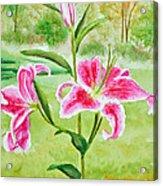 Pink Oriental Lillies Acrylic Print