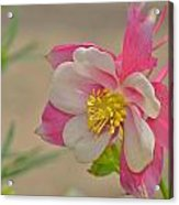 Pink Passion Acrylic Print by Old Pueblo Photography