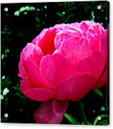 Pink Peony On The Side Acrylic Print