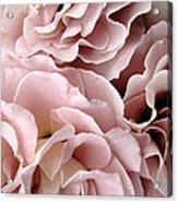 Pink Petal Profusion Acrylic Print