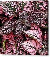 Pink - Plant - Petals Acrylic Print