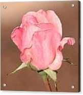 Pink Petals Acrylic Print by Julie Cameron
