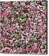 Pink Petals On Stones  Acrylic Print