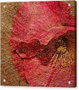 Pink Poppy Gold Leaf Acrylic Print