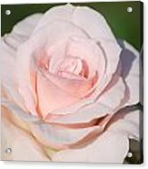 Pink Promise Acrylic Print by Nancy Edwards