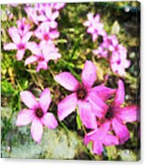 Pink Propellers  Acrylic Print