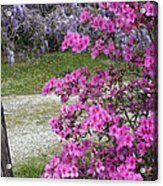 Pink Purple Mississippi Blooms Acrylic Print