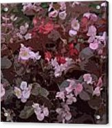 Pink Purple Riot Acrylic Print