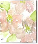 Pink Quince Acrylic Print
