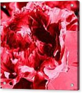 Pink Red Flower Acrylic Print