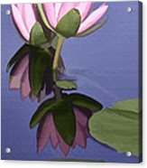 Pink Reflection Acrylic Print