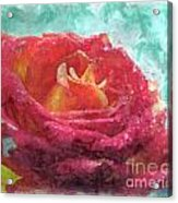 Pink Rose - Digital Paint II Acrylic Print