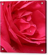 Pink Rose 03 Acrylic Print