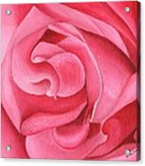 Pink Rose 14-1 Acrylic Print by William Killen