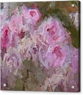 Pink Rose Abstract Acrylic Print