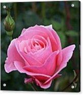 Pink Rose Bud I Acrylic Print