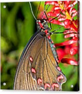 Pink Rose Butterfly Acrylic Print