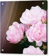 Pink Rose Cluster Acrylic Print