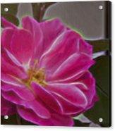 Pink Rose Digital Art 2 Acrylic Print
