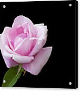 Pink Rose On Black Acrylic Print