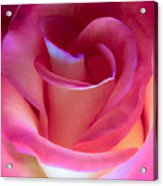 Pink Rose Pedals Acrylic Print