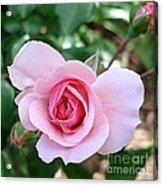 Pink Rose - Square Print Acrylic Print