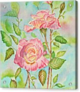 Pink Roses And Bud Acrylic Print