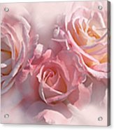 Pink Roses In The Mist Acrylic Print