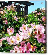 Pink Roses Near Trellis Acrylic Print